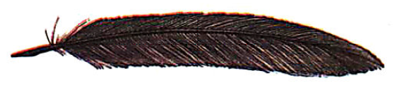 File:Eaglesfeather.png