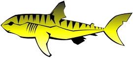 File:Tiger Sharks.jpg