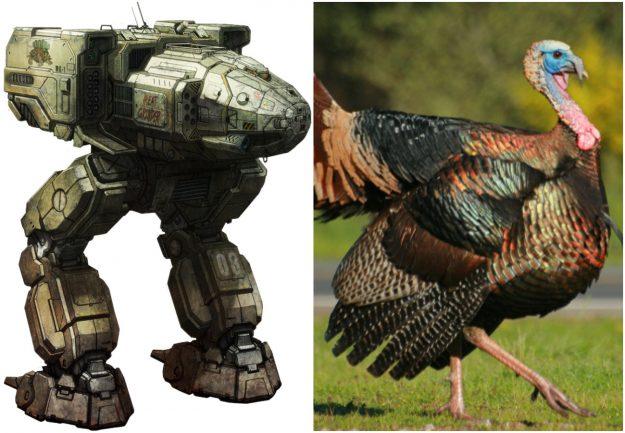 Stalker Turkey