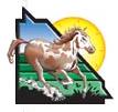 1894th Light Horse.jpg