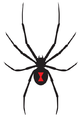 Black Widow Company.jpg