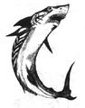 Diamond Shark CBTComp.png